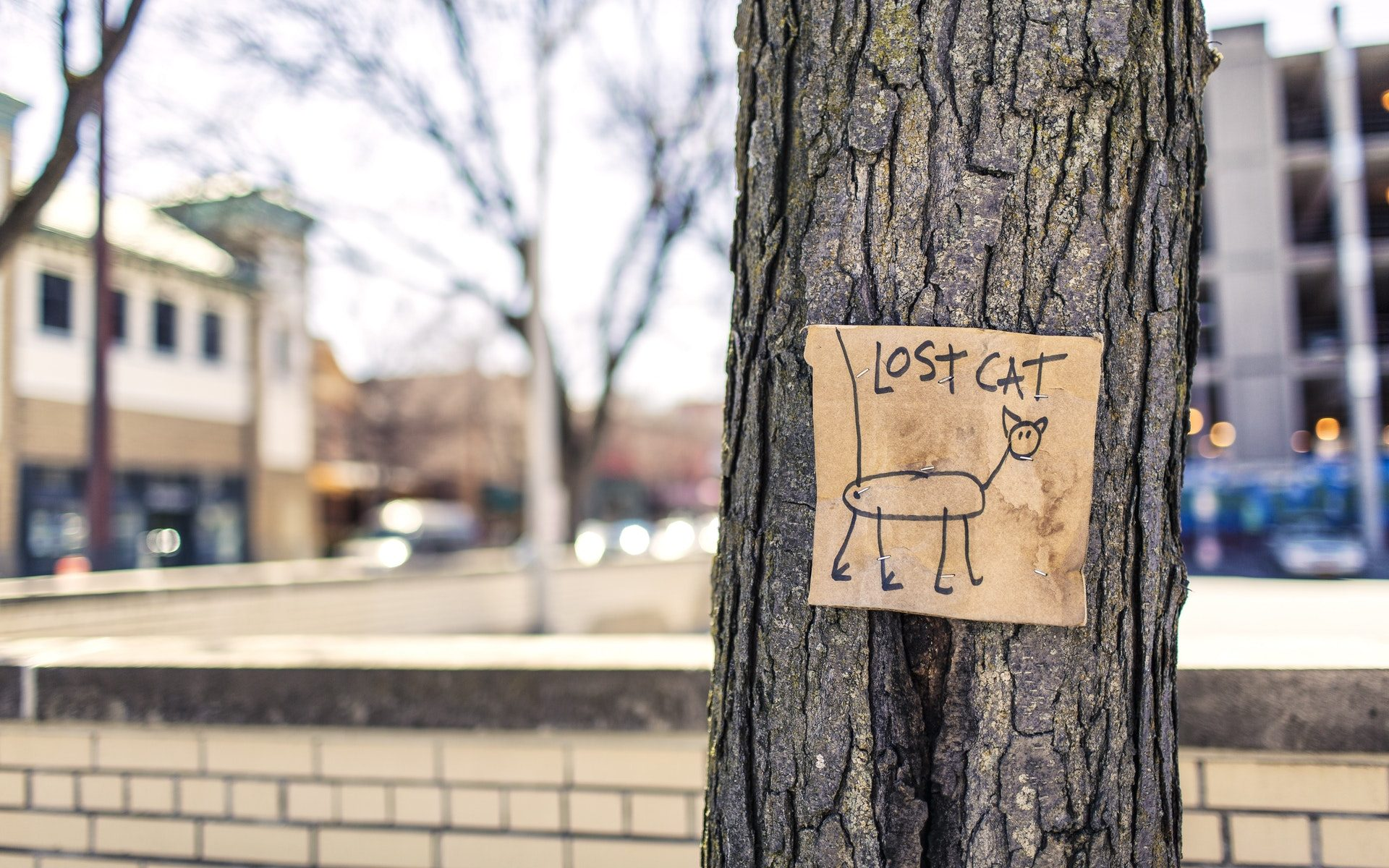 pet-trackaer-gps-device-for-lost-cat-tree-sign-fun